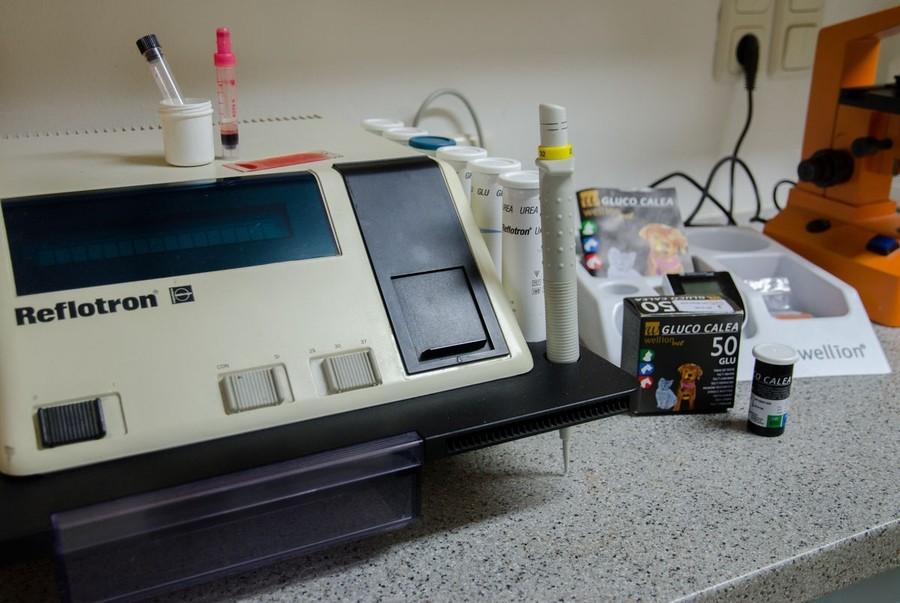 tierarztpraxis daniela plainer in munderfing tierarzt gesundheit. Black Bedroom Furniture Sets. Home Design Ideas