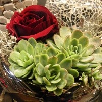 Blumen29112011 038