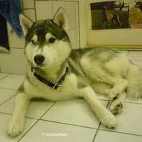 Husky.Cole..