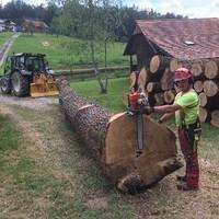 Forstarbeiten Rudi Schabernack6