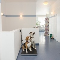 Tierärztliche Gemeinschaftspraxis6