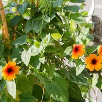 Happy Flower   Floristik & Geschenksartikel3