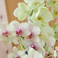 Happy Flower   Floristik & Geschenksartikel8