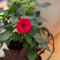 Blumenkistl Predl22