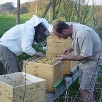 Bienenarbeit - Frühjahrsrevision
