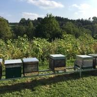 Bienenweide vor den Bienenstöcken