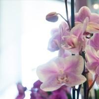 Blumen & Gartenwelt JM12