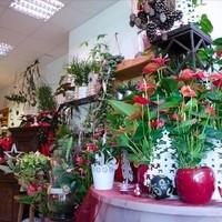 Blumen & Gartenwelt JM2