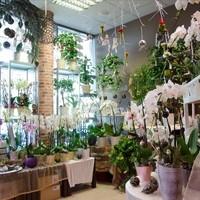 Blumen & Gartenwelt JM4