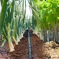 Rivulis Bewässerung