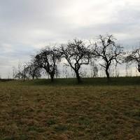 Aufnahme Grundstück