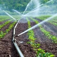 Rivulis   Corn Irrigation, Surface Drip Irrigation