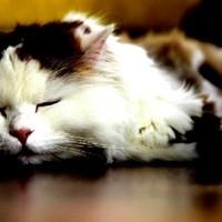 Tieraufnahmen Katze