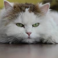 Tieraufnahmen Katze2