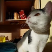 Tieraufnahmen KatzeH