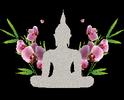 Gewerbliche Masseurin (Akupunkt Meridian Massage Therapeutin  Patrizia Hinterleitner, Dipl. Krankenschwester und AMM-Therapeutin | Roland Hinterleitner, Tierarztassistent und Tierenergetiker )