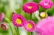 Start in den Frühling !