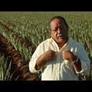 Julio, der Aloe-Mann ·deutsch·