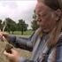 Spritzmittel mit Glyphosat: Wurzel-Forschung an der Uni Hohenheim | Unser Land | BR Fernsehen