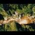 Nationalpark Region Ennstal - Der Film