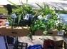 Pflanzltauschmarkt Weitersfelden