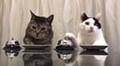 Katzen haben Tatzen