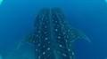 Undersea Hunter Group