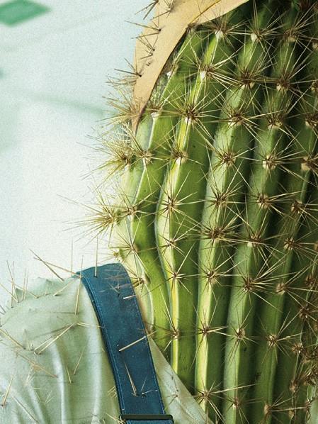 cactus folio1