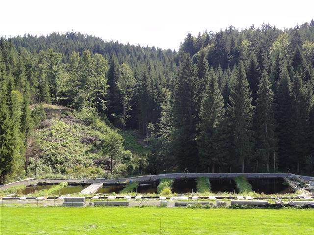 Freiwald Fische Windhaag