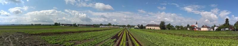 Panorama Salatfeld 800x600