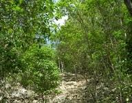 Nature Track
