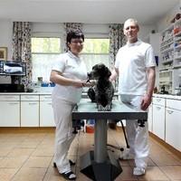 Untersuchung Hund Ordination 1