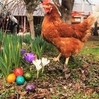 Brunhilde wünscht Frohe Ostern!