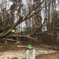 Forstarbeiten Rudi Schabernack4