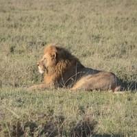 Serengeti 2011 1