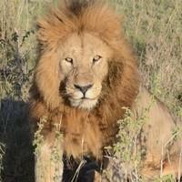Serengeti 2011 2