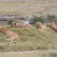 Serengeti 2011 3