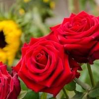 Happy Flower   Floristik & Geschenksartikel31