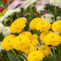 Happy Flower   Floristik & Geschenksartikel32