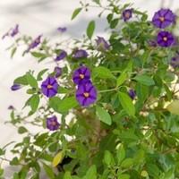 Happy Flower   Floristik & Geschenksartikel5