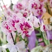 Happy Flower   Floristik & Geschenksartikel7