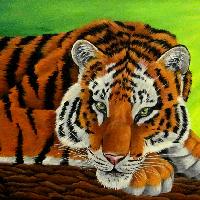 Acryl Tiger