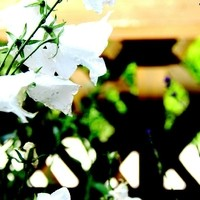 Nahaufnahme Blumen