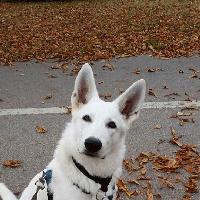Tieraufnahme Hund3