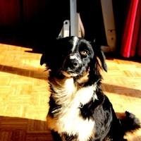 Tieraufnahmen Hund