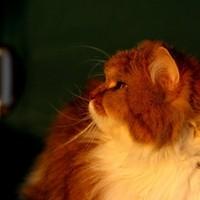 Tieraufnahmen Katze3