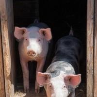 Biohof Brenner Fleisch  u. Wurstprodukte   Kutschfahrten6