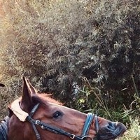 Calaro mein privates Pferd (1)