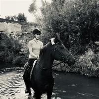 Calaro mein privates Pferd (2)