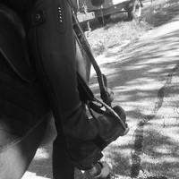 Schulpferd Laky (7)